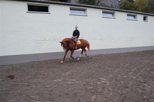 URGENT vols de chevaux belgiques Sizer_11