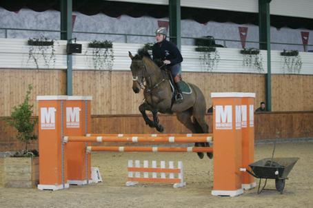 URGENT vols de chevaux belgiques Sizer_12
