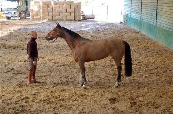 URGENT vols de chevaux belgiques Sizer_13