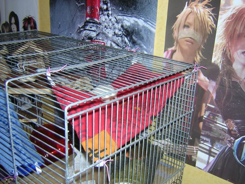 Vos cages : les photos [PAS DE COMMENTAIRES] - Page 3 Dscn0317