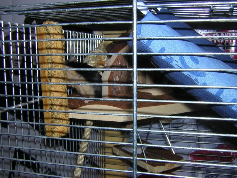 Vos cages : les photos [PAS DE COMMENTAIRES] - Page 3 Dscn0318