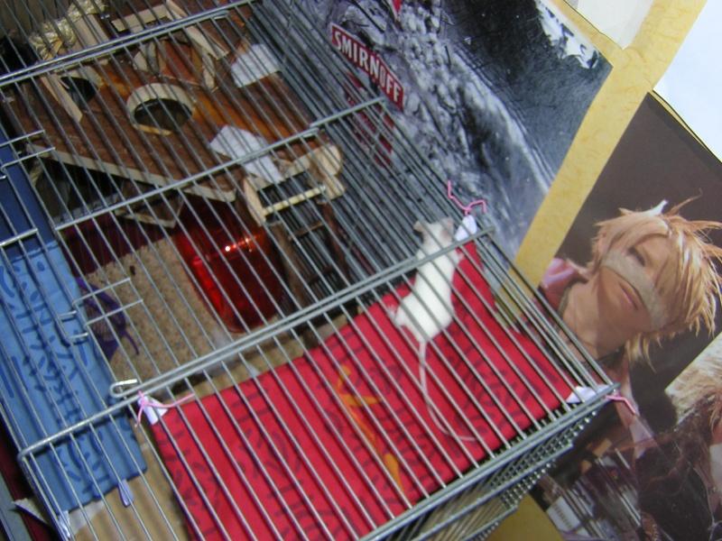 Vos cages : les photos [PAS DE COMMENTAIRES] - Page 3 Dscn0321