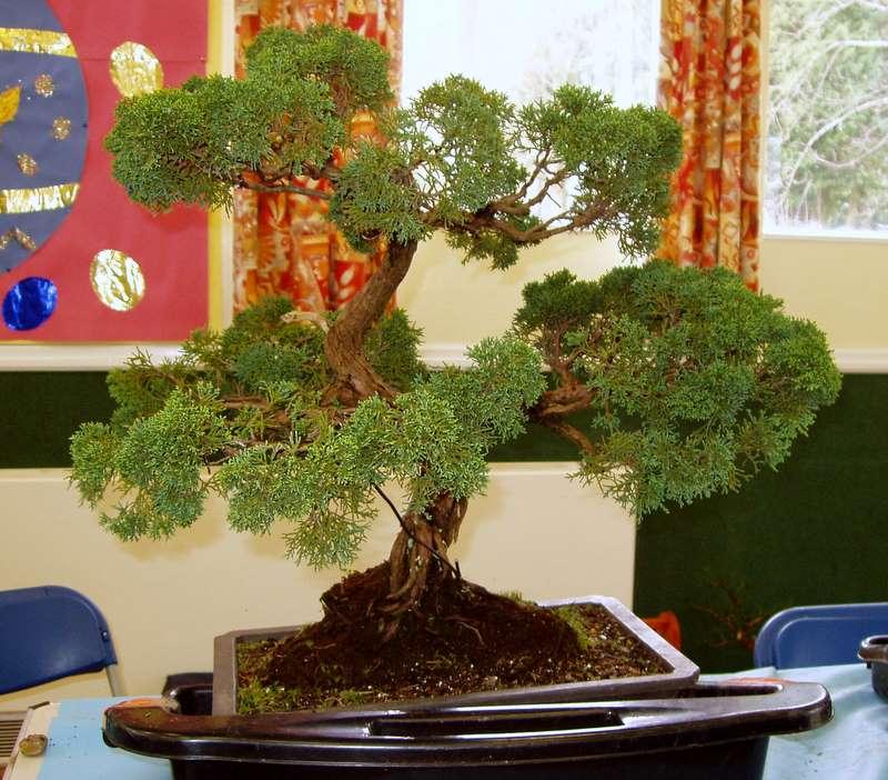 Busy bonsai weekend 03610