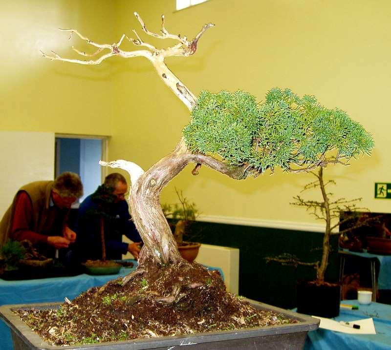 Busy bonsai weekend 04610