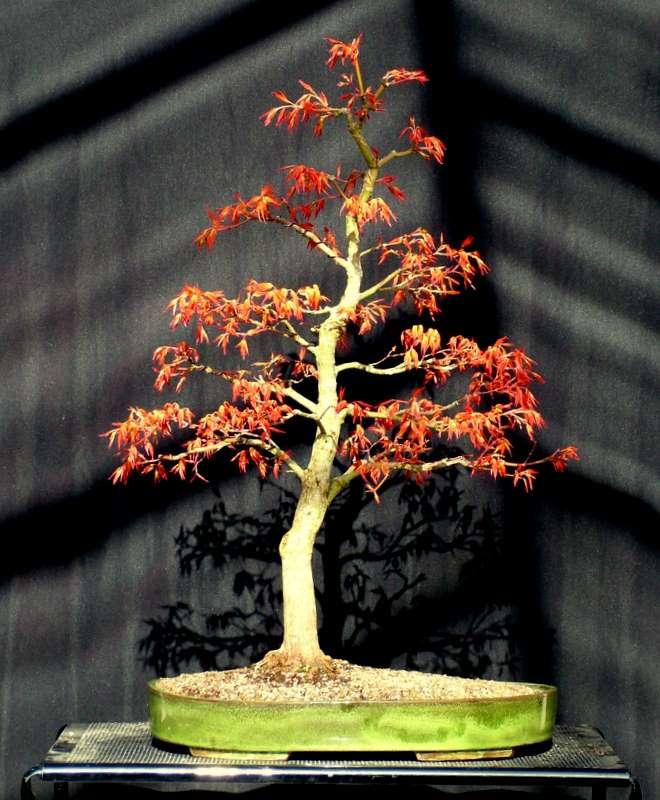 Busy bonsai weekend Dscf3616