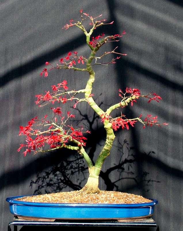 Busy bonsai weekend Dscf3617