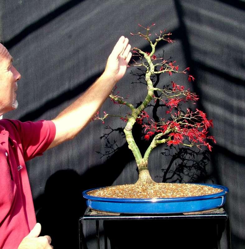 Busy bonsai weekend Dscf3618