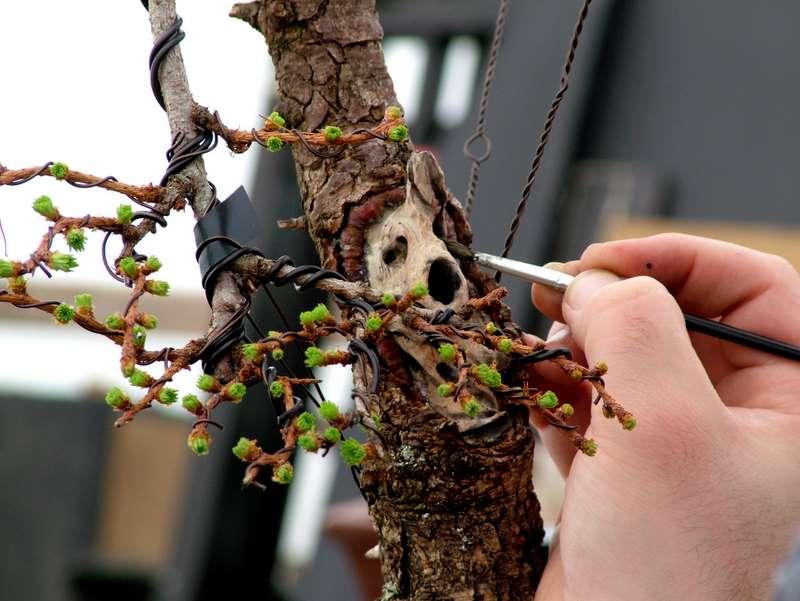 Busy bonsai weekend Dscf3717