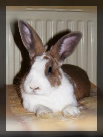 Charlotte,  lapine stérilisée, née en 2009 - Page 2 00111