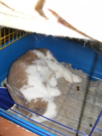 Charlotte,  lapine stérilisée, née en 2009 - Page 2 00412