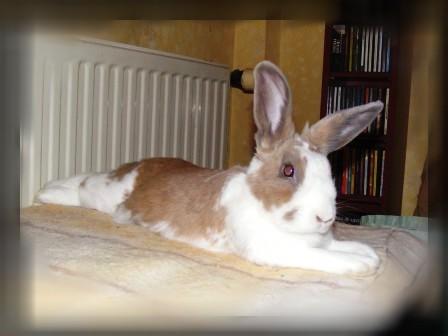Charlotte,  lapine stérilisée, née en 2009 - Page 2 00510