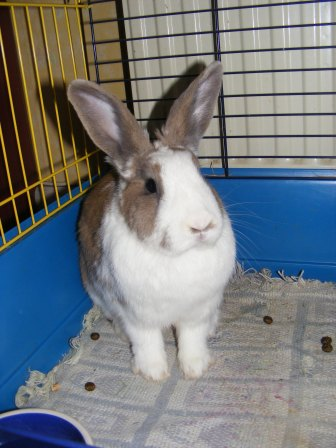 Charlotte,  lapine stérilisée, née en 2009 - Page 2 Fa_mar16