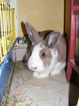 Charlotte,  lapine stérilisée, née en 2009 - Page 2 Fa_mar17