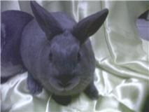 Flappie, née en novembre 2010 Fappie10