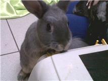 Gloupie, née en novembre 2010 Gloupi10