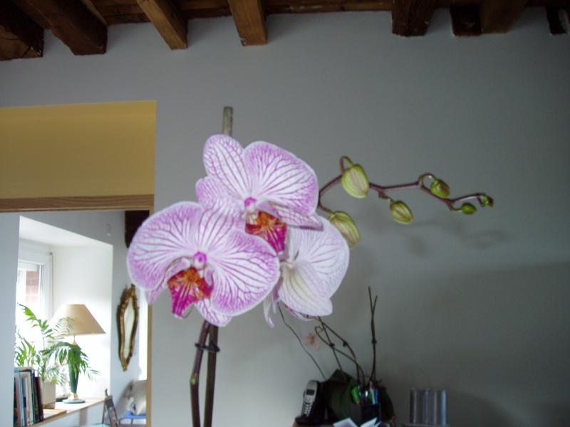 """Un """"rejeton"""" sur une tige d'orchidée P1010010"""