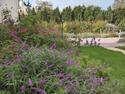 massifs de sauges du  jardin Florai18