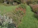 massifs de sauges du  jardin Plate_10