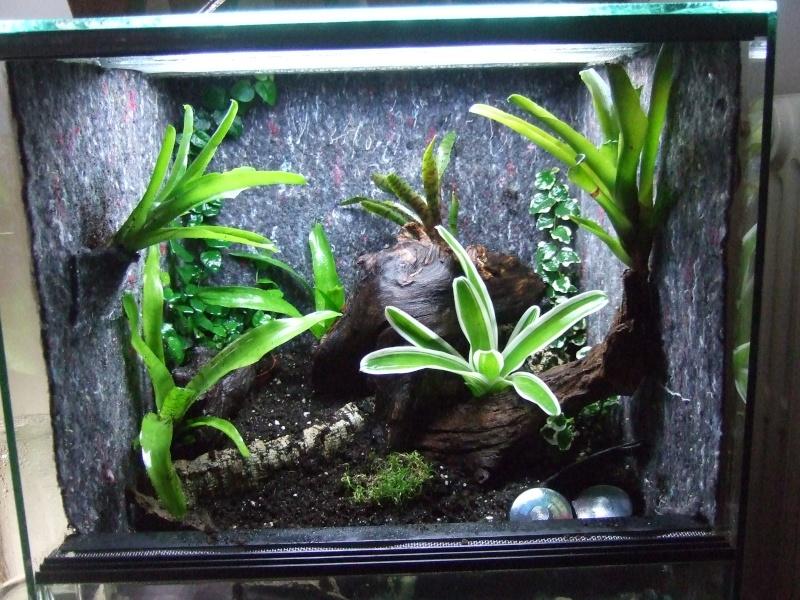 Mon nouveau terrarium Photo_27