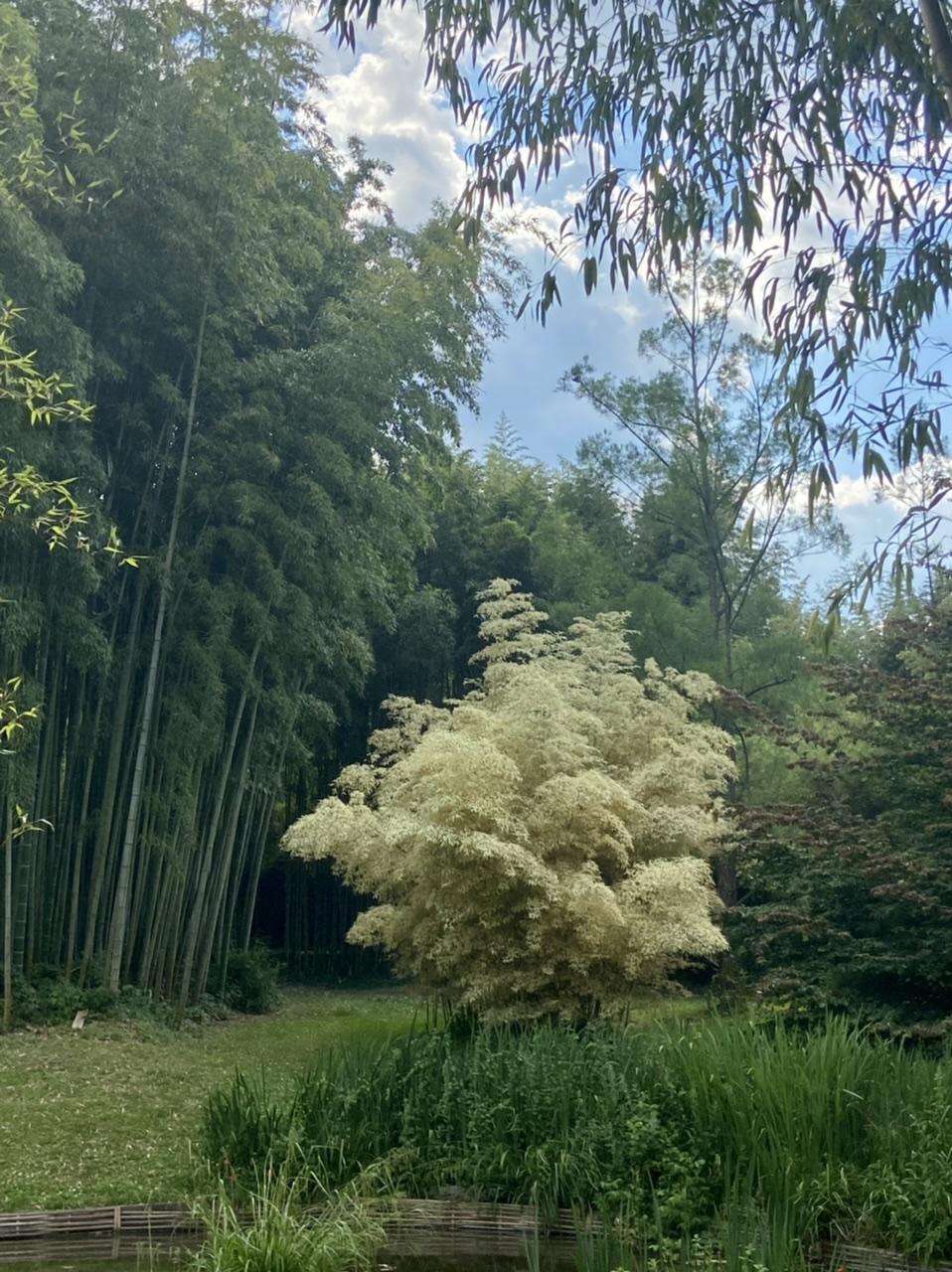 La Bambouseraie d'Anduze Cada6e10