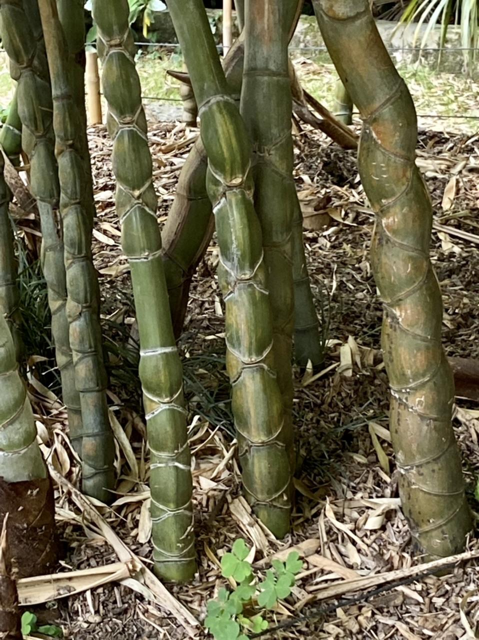 La Bambouseraie d'Anduze D0b44410