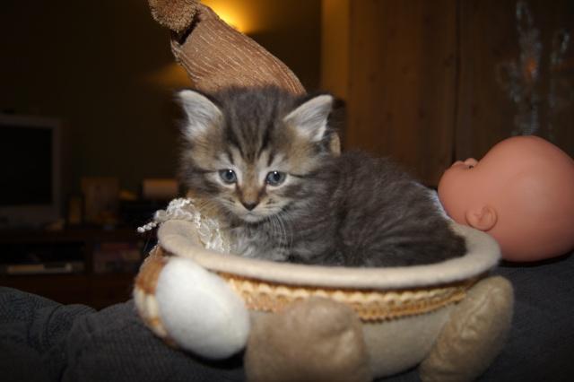 concours photo:  le chat en fête! Dsc04910