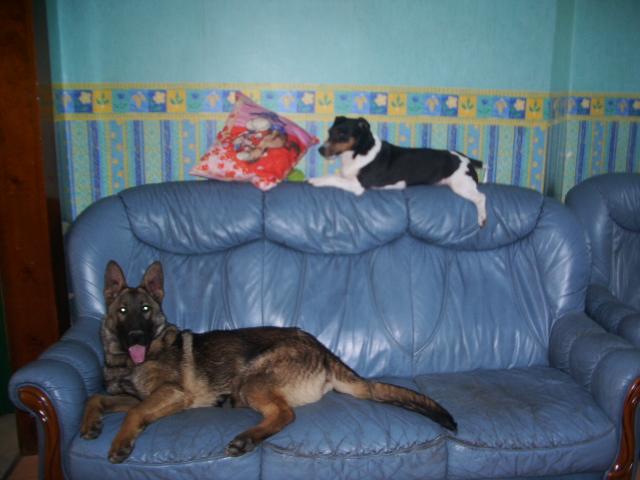 nos chiens chez des colombophiles Imgp1510
