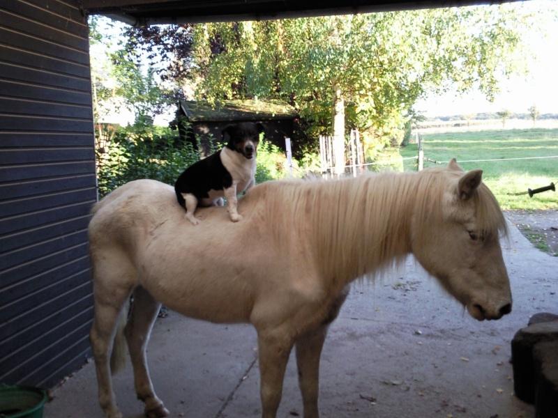 nos chiens chez des colombophiles Photo011