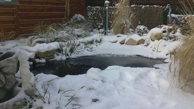 petites photos ce jour de neige et de GRAND FROID !!!!!! 03122010