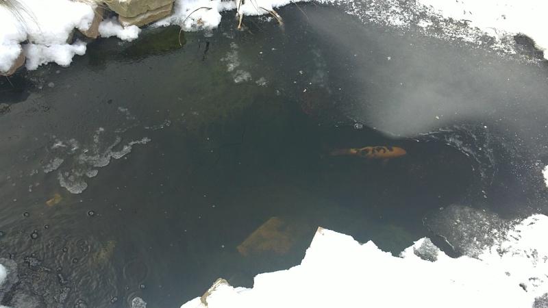 petites photos ce jour de neige et de GRAND FROID !!!!!! 03122011