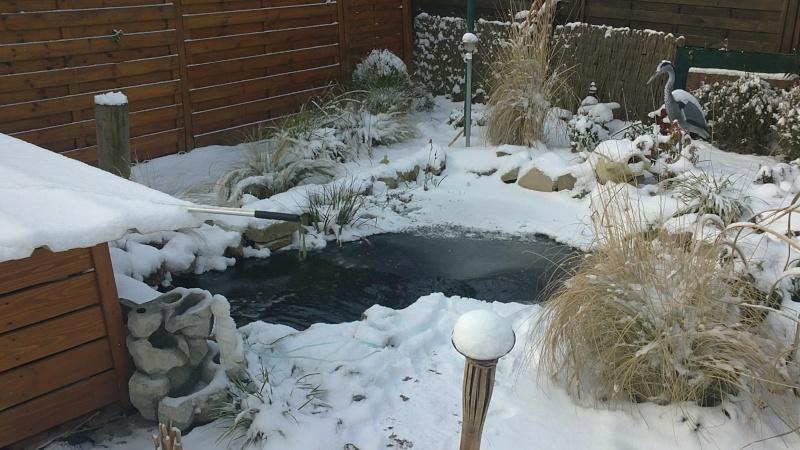 petites photos ce jour de neige et de GRAND FROID !!!!!! 03122013