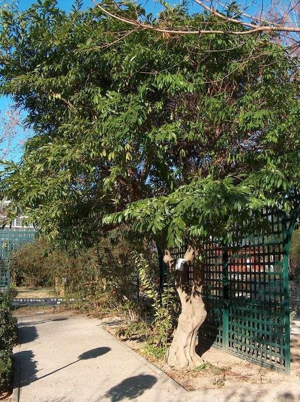 Le parc Borély à Marseille Hpim5910