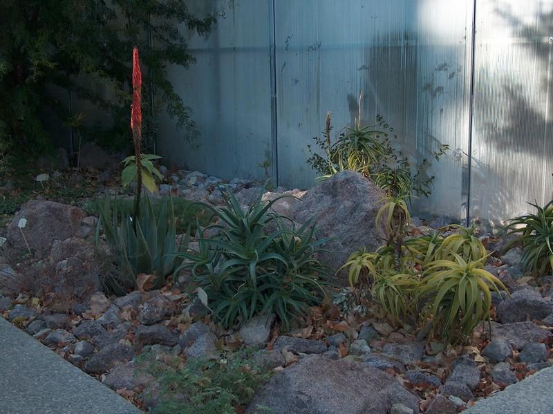 Le parc Borély à Marseille Hpim5913
