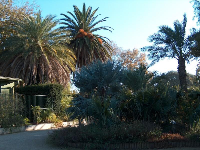 Le parc Borély à Marseille Hpim5920