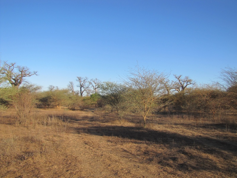 voyage au Sénégal  Img_2913
