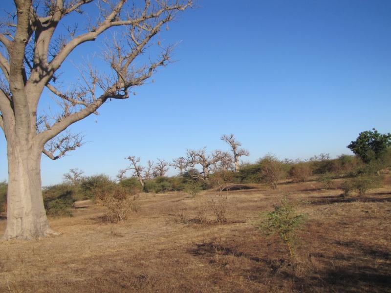 voyage au Sénégal  Img_2914