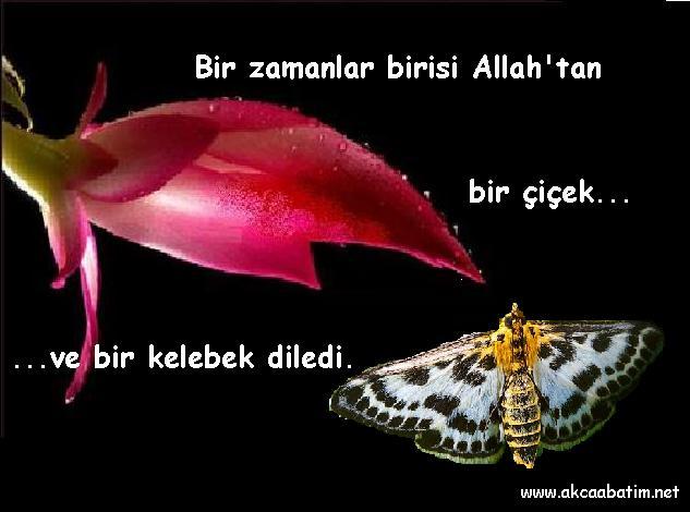 citations/poemes...(en turc ou en francais) 67454010