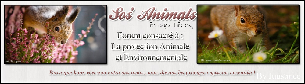 SOS'Animals