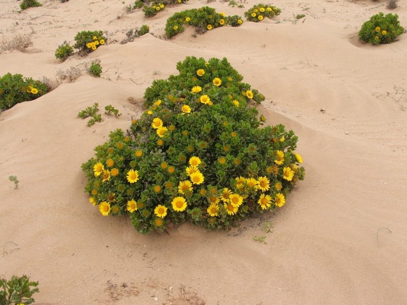Mes premiers 3 mois au Maroc 13910