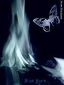 Mimi.Medusa Blue_b15