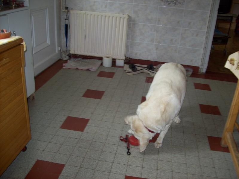 Miki 12 ans, femelle labrador sable, urgent maitresse hospitalisée 95 - Page 2 00810