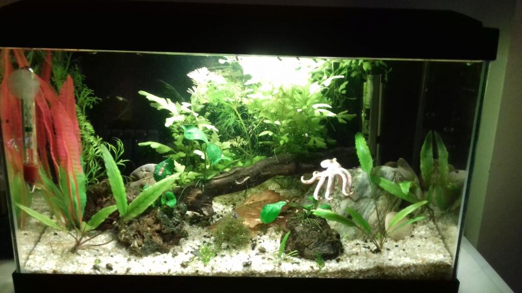 mes aquariums 20181110