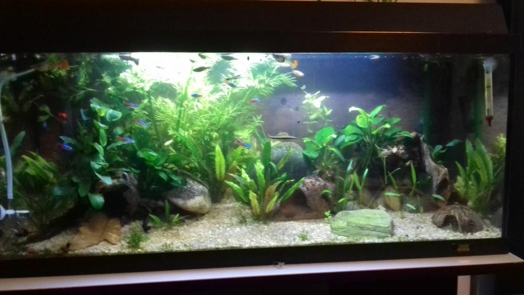 mes aquariums 20181112