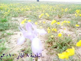 رحلة ثانوية بلدة محكان إلى بادية الشام 0_1310