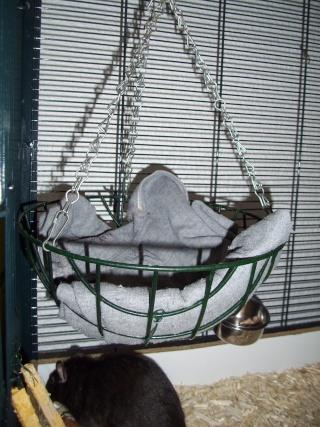 mes cages... et la pièce de vie  - Page 3 01012