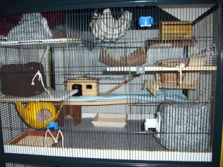 mes cages... et la pièce de vie  - Page 5 29_03_10