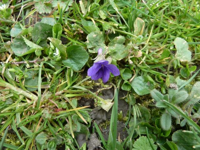 Les violettes - Page 3 00217