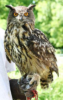 Reconnaitre les oiseaux de nos jardins... - Page 5 Le_gra10