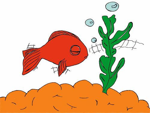 pas à pas poisson rouge / poisson clown (drawny) Poisso12