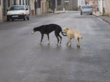 Labrador en la calle Mail210